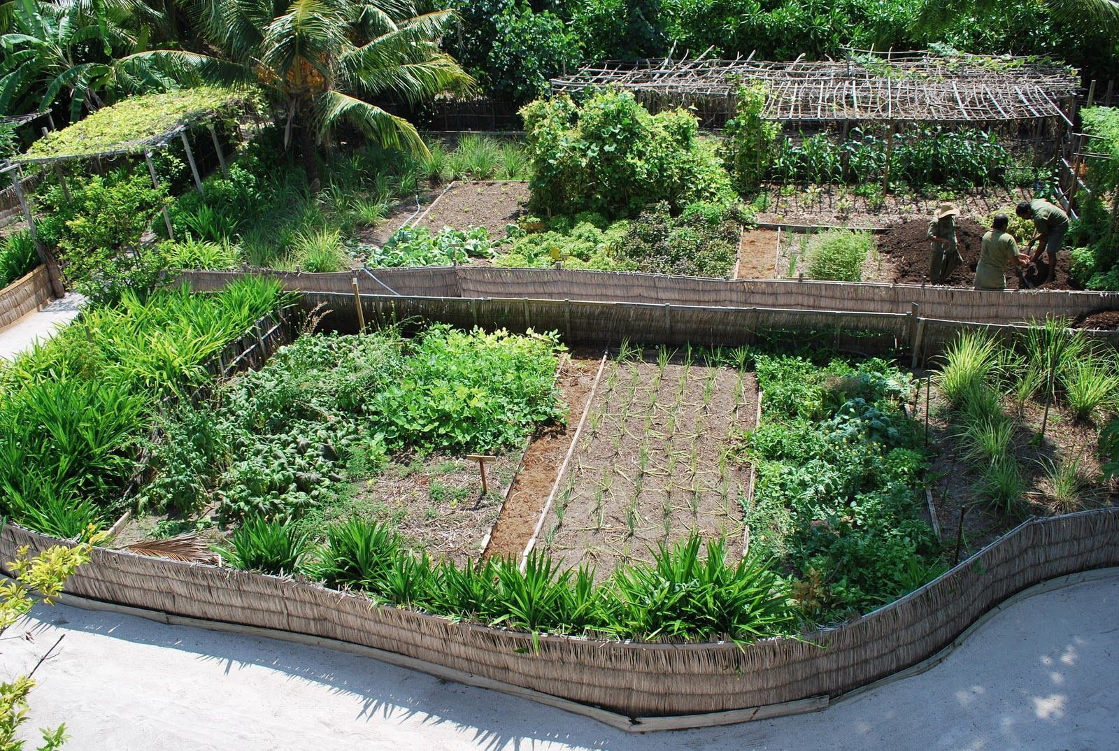 Garden design permaculture designs pinterest for Garden design ideas nsw
