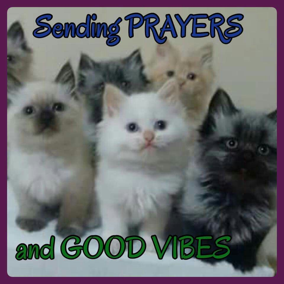 Image result for Sending prayers kitty cat