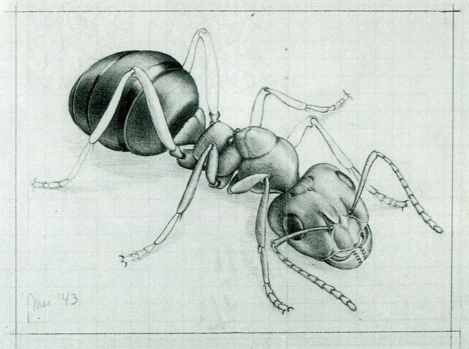 Bug on escher moebius strip