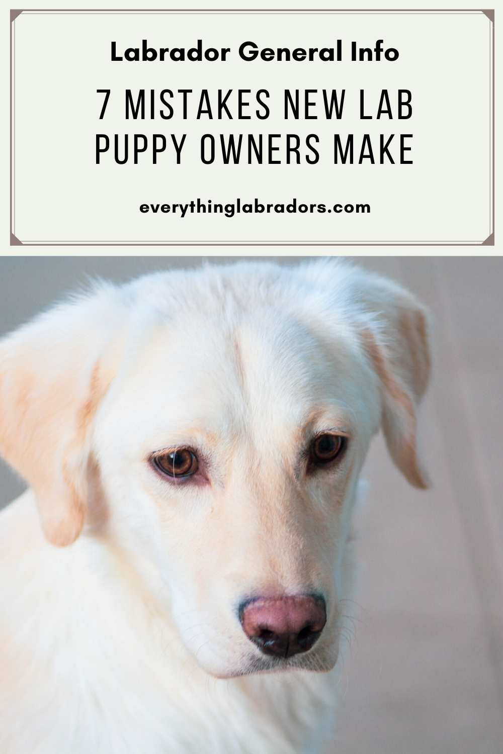 33+ Do labradors need haircuts trends
