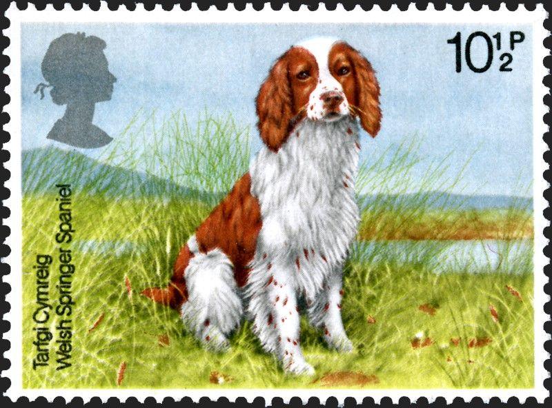 Tarfgi Cymreig Welsh Springer Spaniel British Dogs United Kingdom Of Great Britain Northern Ireland 1979 With Images British Dog Stamp Printing Uk Stamps