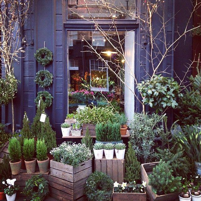 Narcissus Flowers On Instagram Christmas Has Arrived Edinburgh