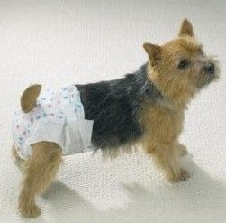 Incontinence In Senior Dogs What You Can Do Dog Diapers Dog Incontinence Urinary Incontinence