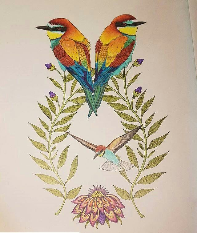 Bee Eaters Beautifully Coloured By Cozmick092571 Their Natural Colouring Is Stunning Repost Birdtopia Adultc Bird Drawings Coloring Books Bird Art