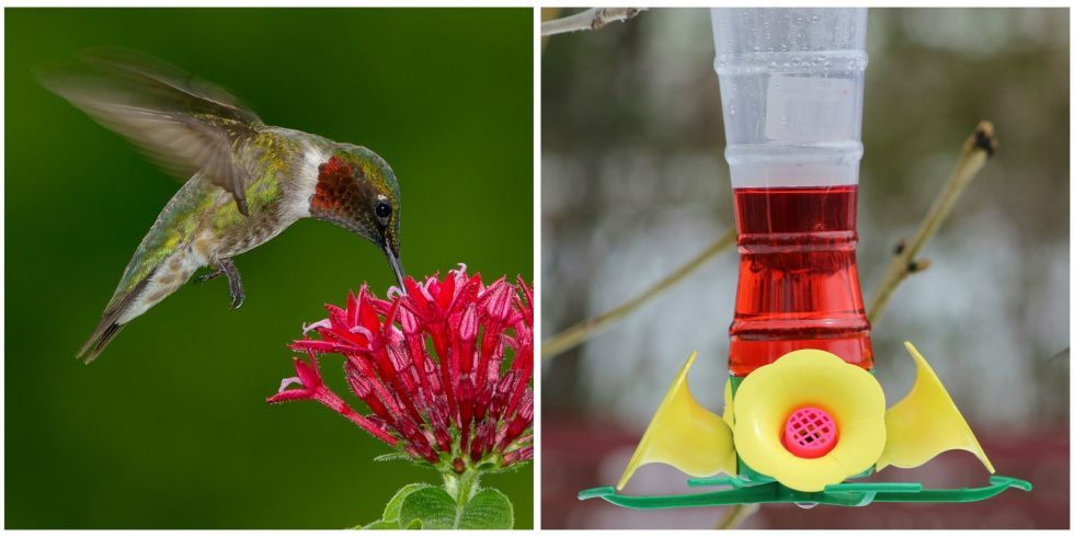 Wildlife Rescue S Viral Post Begs People To Stop Using Red Hummingbird Nectar Red Hummingbird Hummingbird Nectar Hummingbird Photos