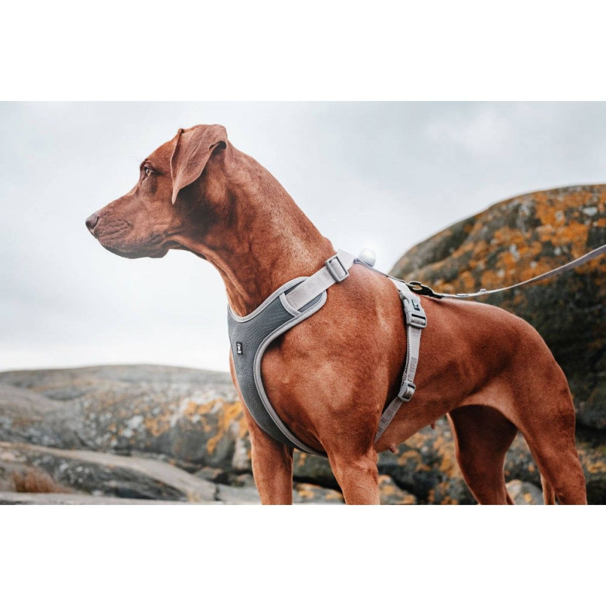 Hurtta Adventure Harness Shadow Hunde-Geschirr Grau | Trendy ...