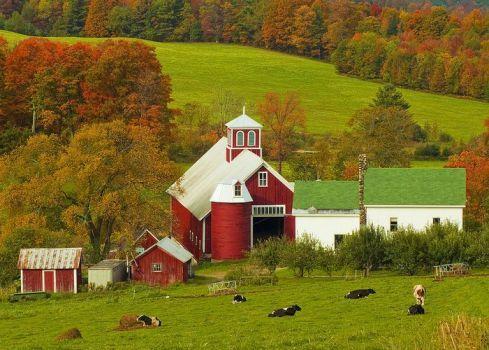 Autumn At Bogie Mountain Dairy Farm - John Vose