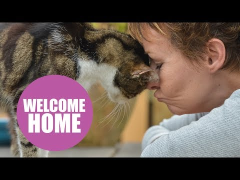 Woman S Cat Went Missing Over A Decade Ago Gets A Call From The Vet She Ll Never Forget Goodfullness In 2020 Cat Allergies Toxic Plants For Cats Therapy Dogs