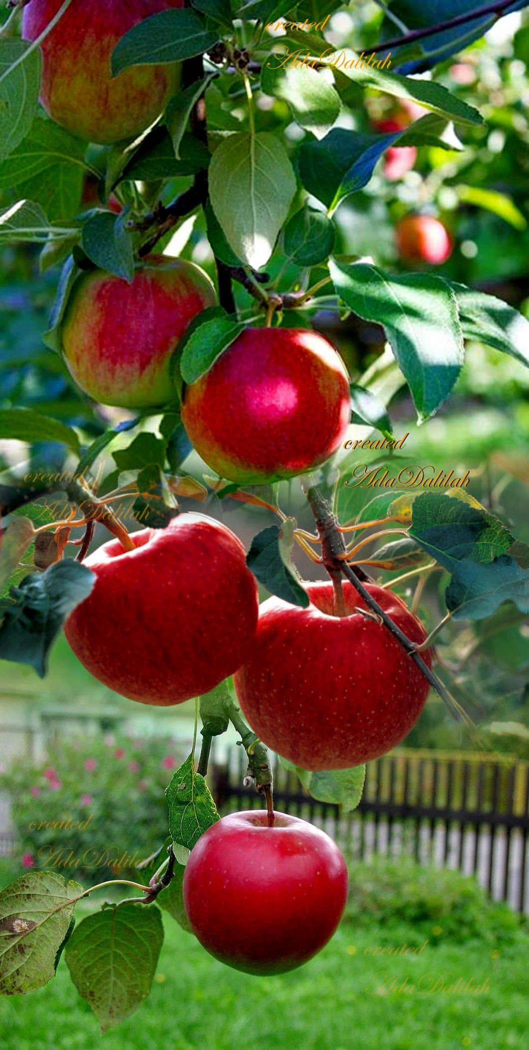 Sign In Pruning Fruit Trees Fruit Garden Growing Fruit Trees
