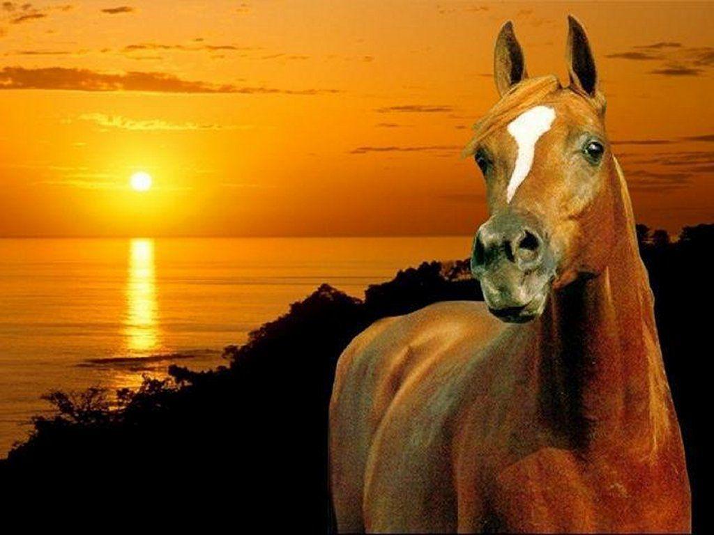 sch ne pferde hintergrundbilder google suche horses. Black Bedroom Furniture Sets. Home Design Ideas