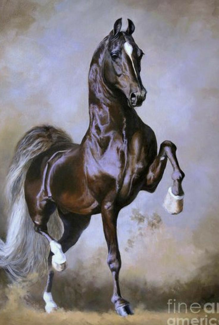 At&t Park Seating Chart : seating, chart, Matias, Clarin, Perez, RESİMLERİ/HORSE, PİCTURES, Horse, Painting,, American, Saddlebred, Horses,, Artwork