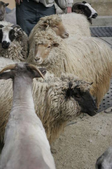 how to wash wool or other fibers for spinning