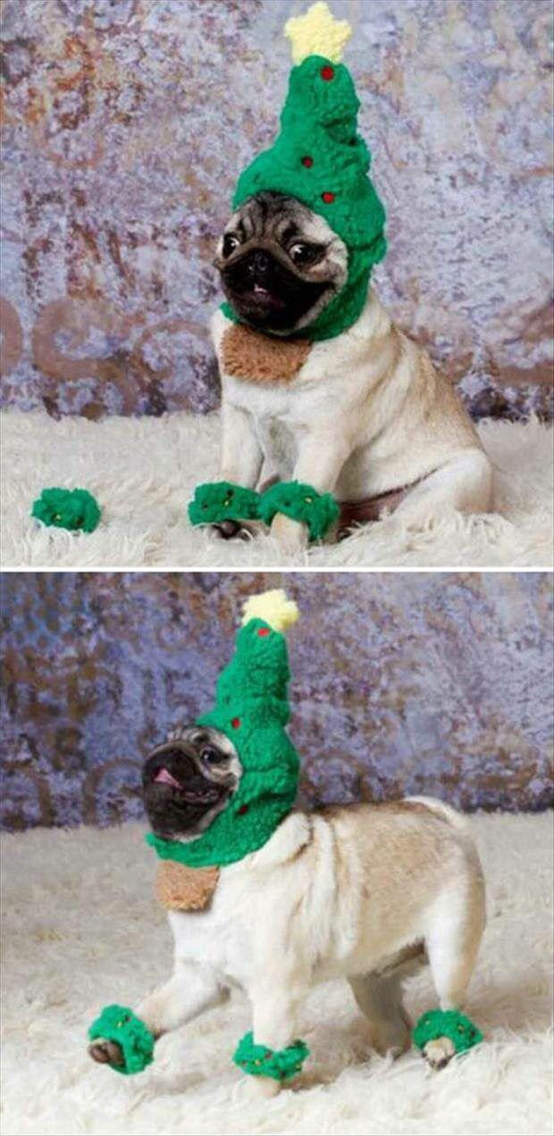 Pug Dog Wearing A Christmas Tree Costume Pugs Funny Animals Cute Pugs