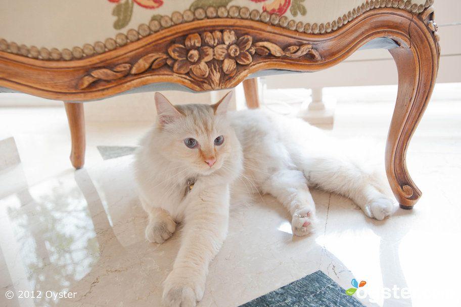 Pharaon Cat Mascot At The Hotel Le Bristol