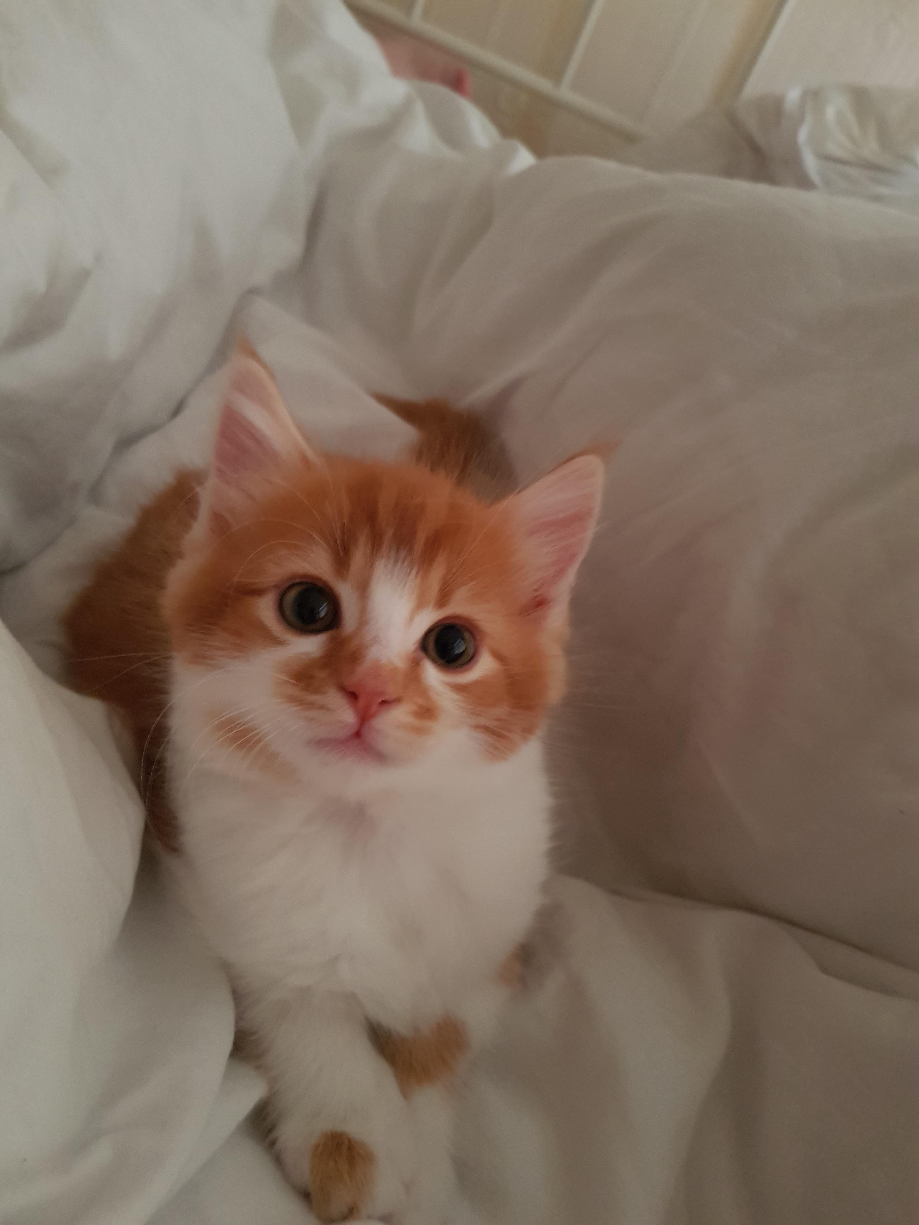 such a handsome photogenic little boy cats pinterest cats
