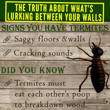 Termites Work Very Hard In Consuming Your Home S Infrastructure They Work 24 7 All Night And Prefer Dark Places Termites Termite Pest Control Termite Control