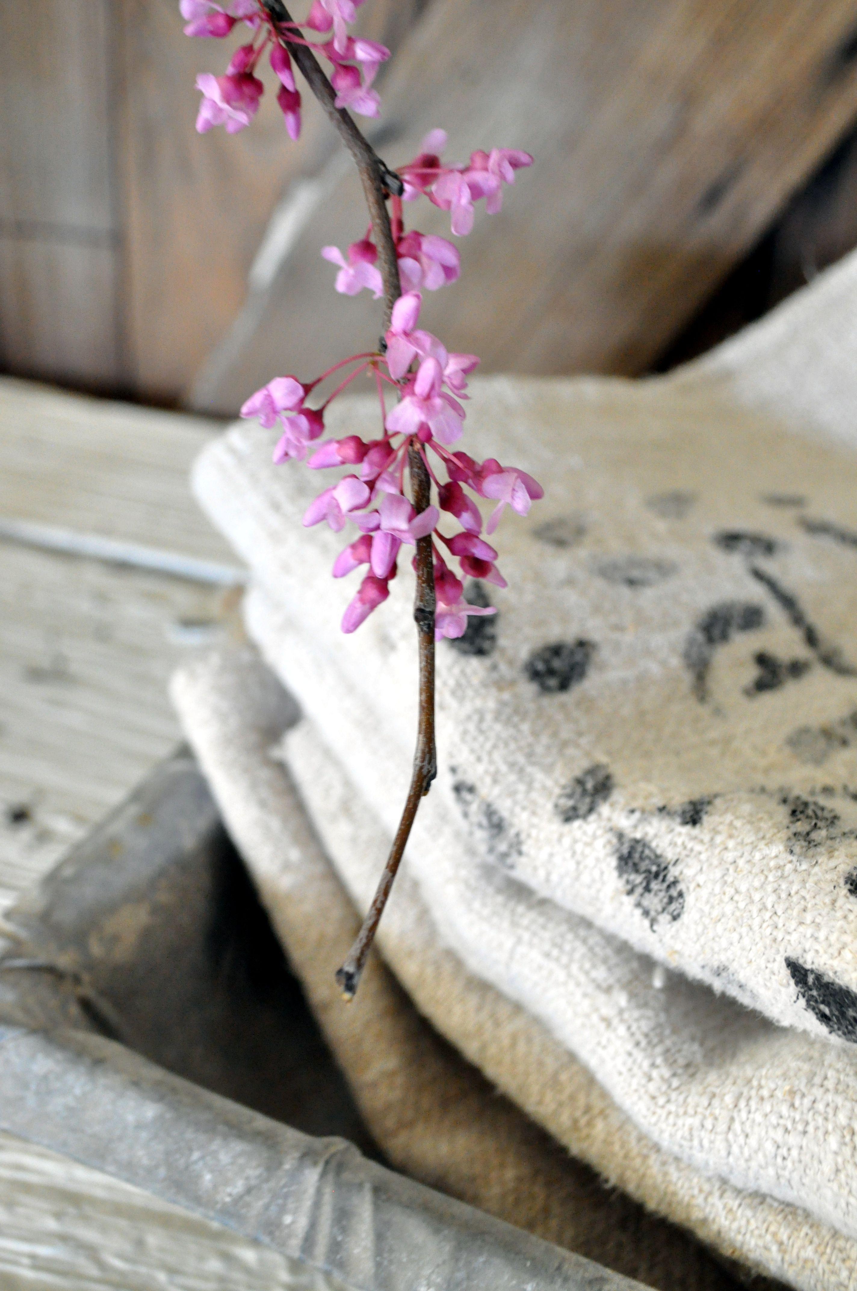 Red bud blooms and grain sacks