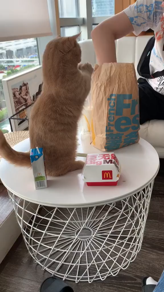 New Funny Pets I want some,please . I want some,please .  #lovely  #lovelycats  #cute #cutecats  #pets  #pet  #cats  #cat  #catsanddogs  #love #funny #funnyvideos 9