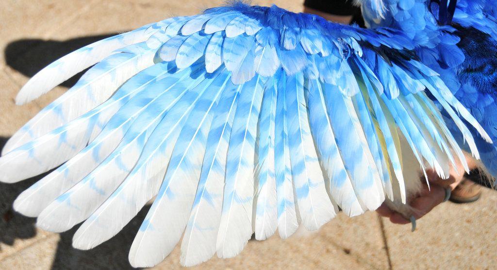 Wing of an Ice Phoenix by mooki003 on DeviantArt   Mystical fuzzy ... 168a9ea7029