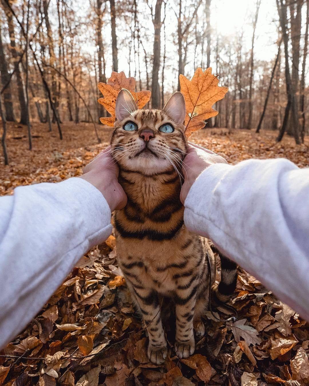 Cute one.http//bit.ly/2LgAkjN Cute cats, Fall cats