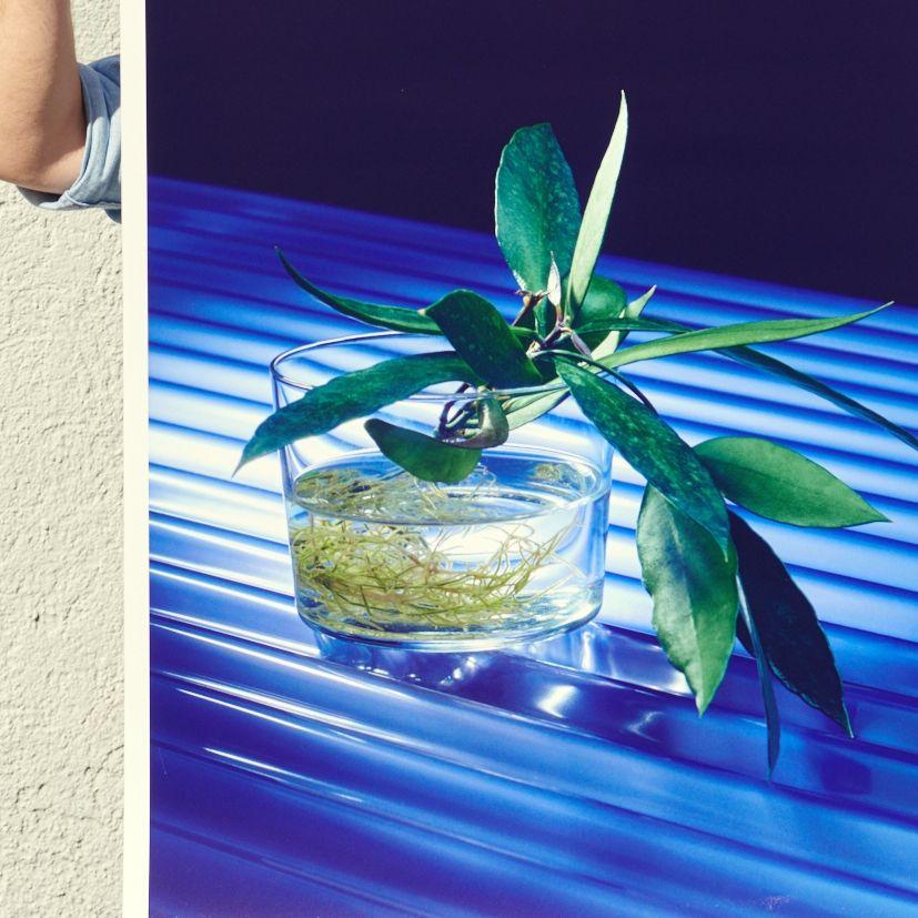 A pretty closeup of our Cion Print . . . . . . . . #edition3000 #claudegasser #plant #plantinwater #waterplant #smallplant #pflanze #wasserpflanze #glass #blue #kunstdruck #foto #fotodruck #artprint #plants #wallart #poster #posterart #posterprints #wandbilder #wandbild #walldecor #wallporn #homedecor #interiordecorate #print #walldecal