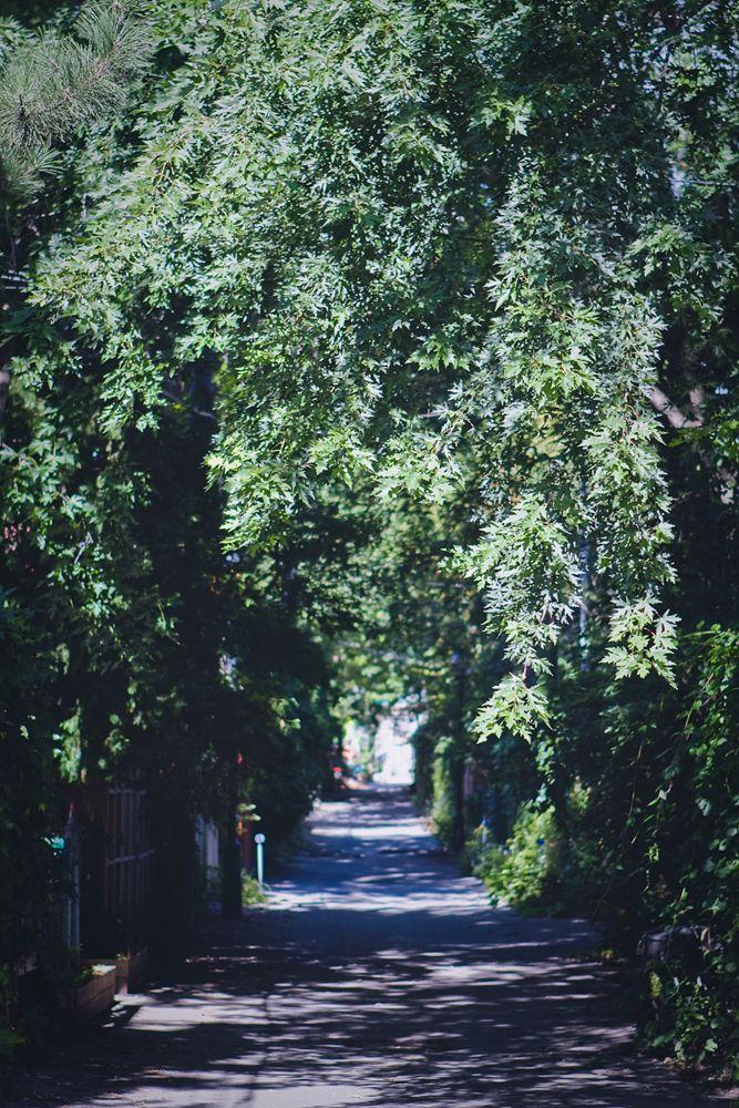 Dans les ruelles du Pateau Mont Royal