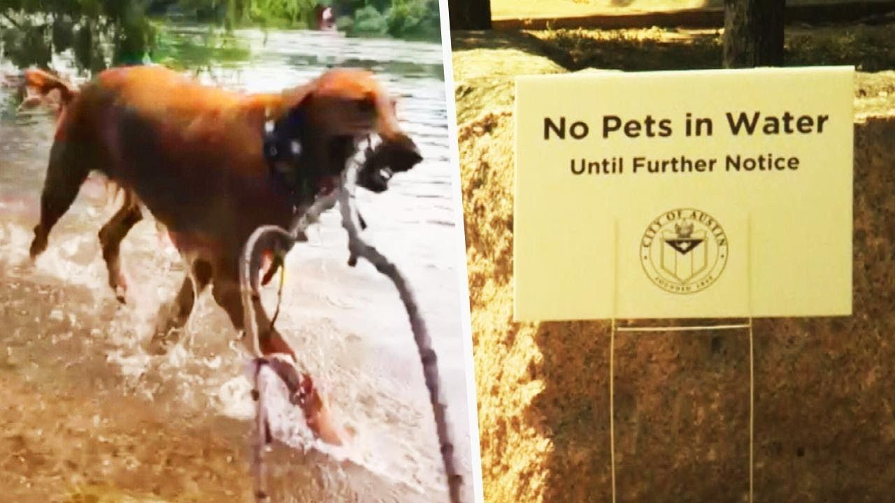 Why Your Dogs Should Stay Out Of Lakes And Ponds Youtube Dog