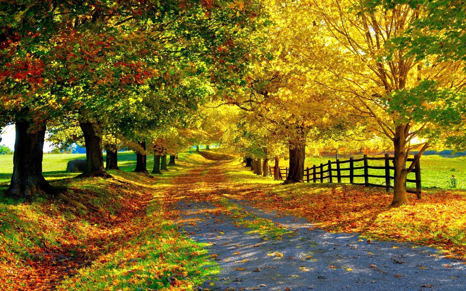 Mr HD Wallpapers Beautiful Autumn Trees 1920x1080