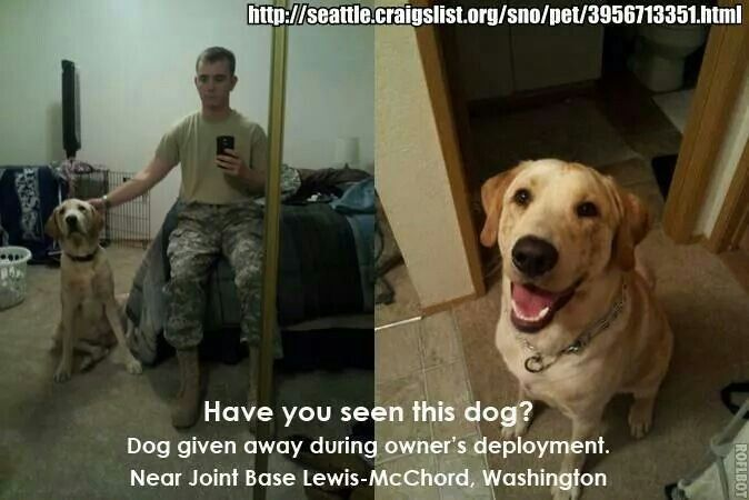 Please read, a vet in search of his buddy. Dogs, Pets