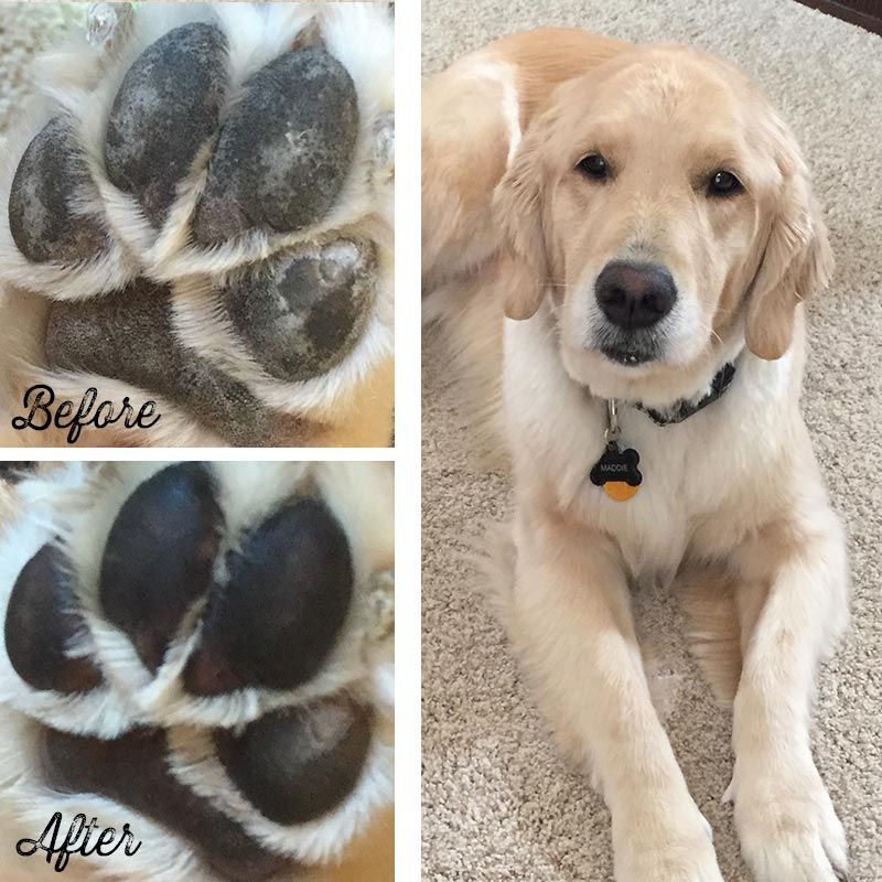 Dog Paw Protection For The Great Outdoors All Natural Pawtection Dry Dog Paws Dog Paw Protection Puppy Paws