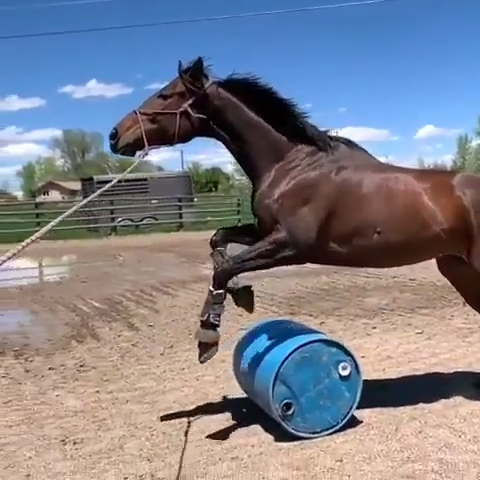 Pin By Zoereessilly On Animals Video Horses Funny Horses
