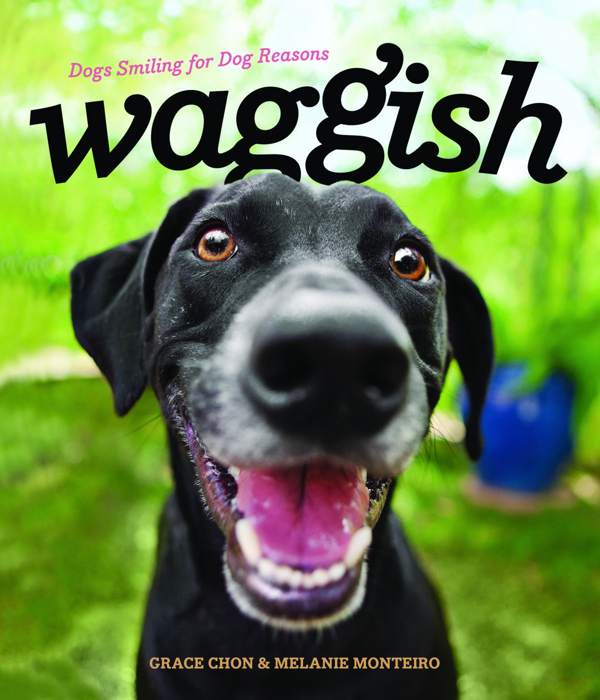 Waggish: Dogs Smiling for Dog Reasons by Grace Chon & Melanie Monteiro, Autumn 2017