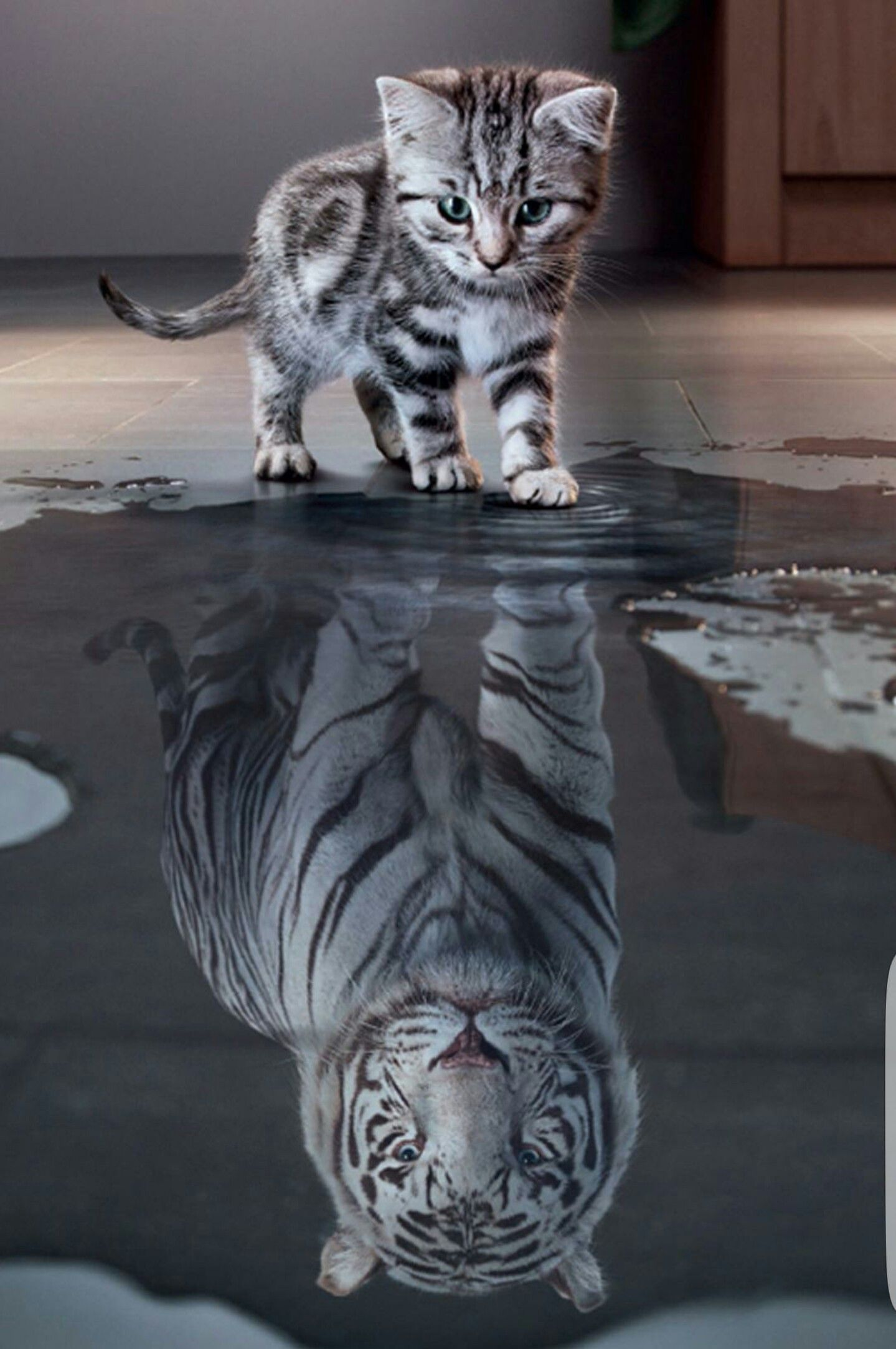 What do you see when you look in the mirror... | Cute animals