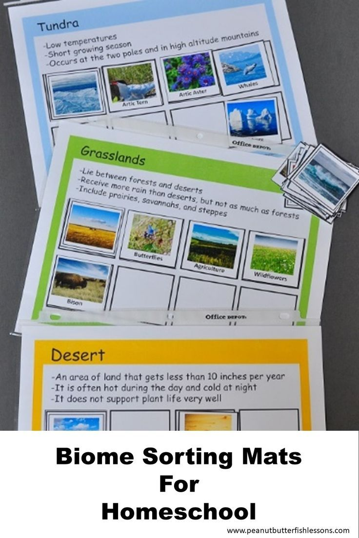 Download these sorting mats for a hands on activity to review learn the worlds biomes with these sorting mats sciox Gallery