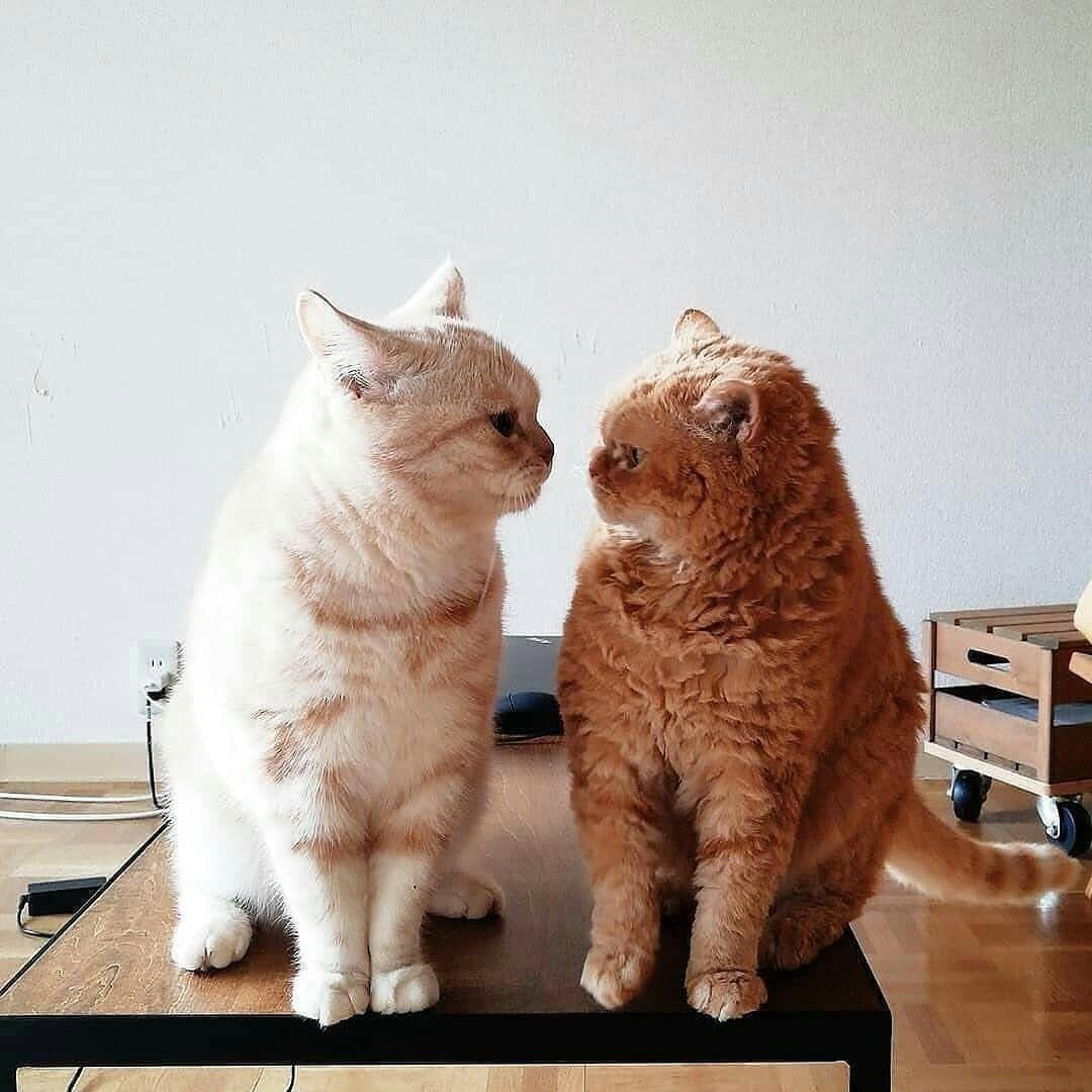 ป กพ นโดย Eve Haven ใน My Love แมว ล กแมว ร ปส ตว ขำๆ