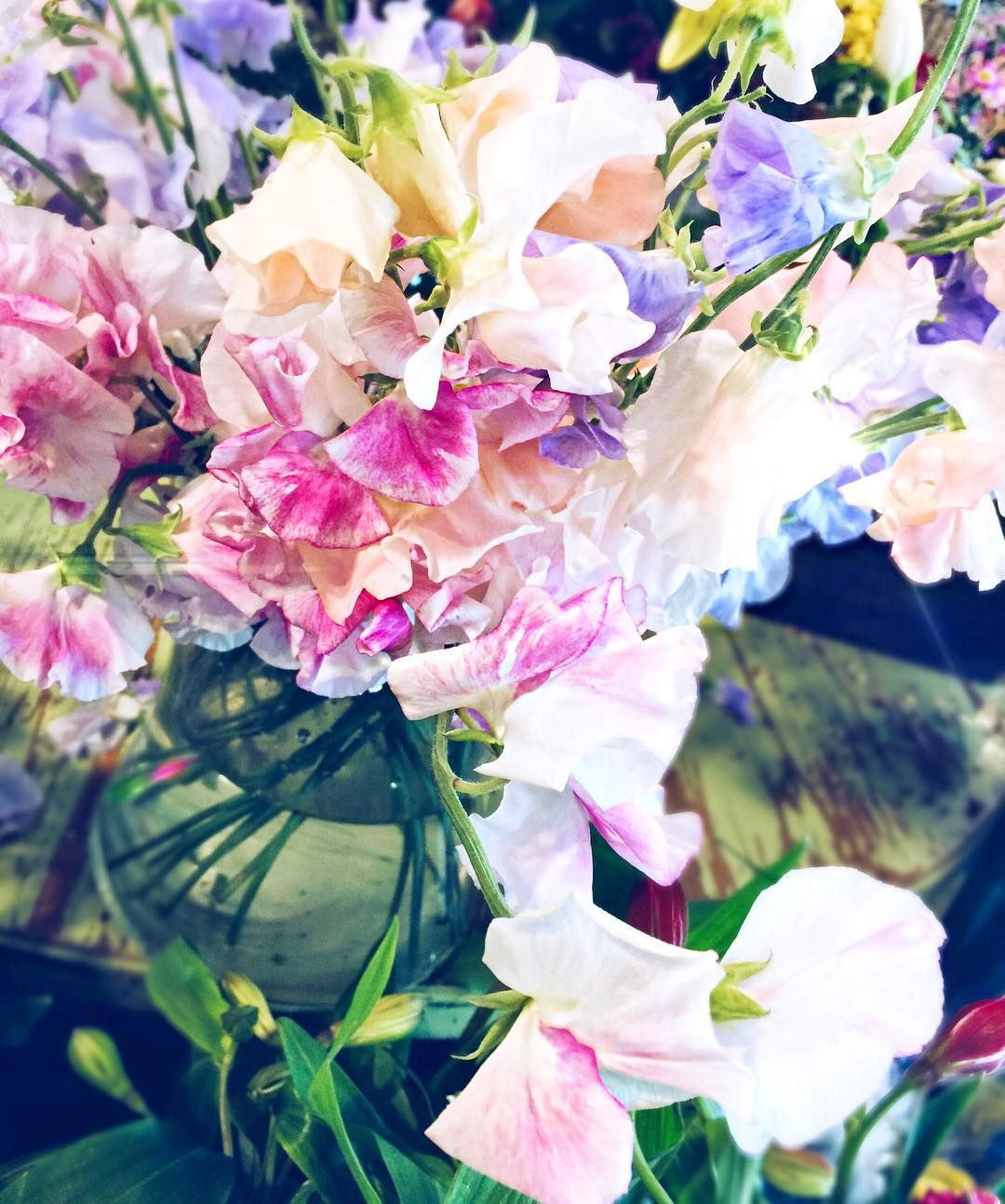 Rise And Shine Pretty Little Flowers Instagram