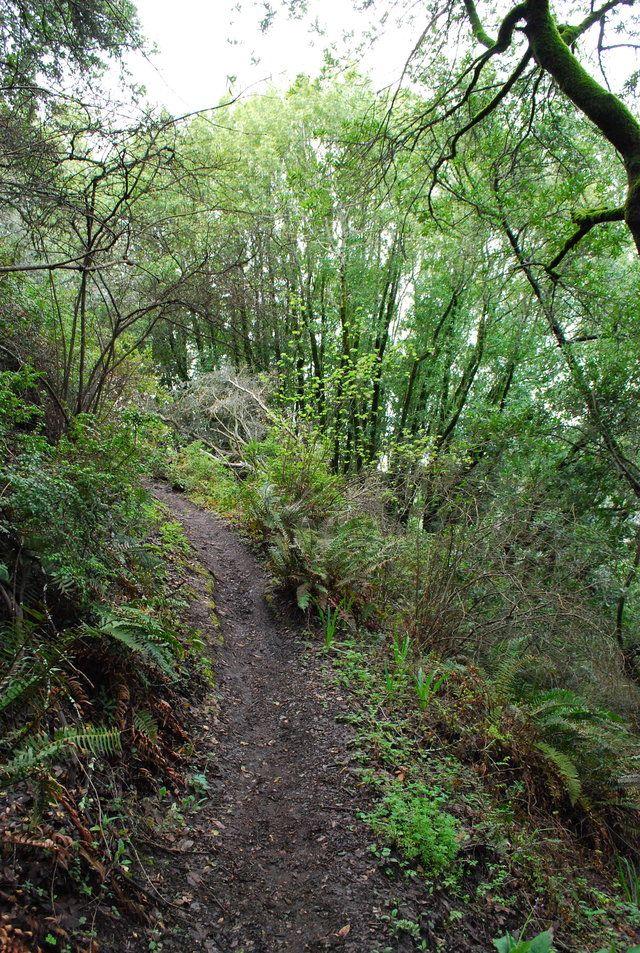 Shady Hiking Trails Near Me