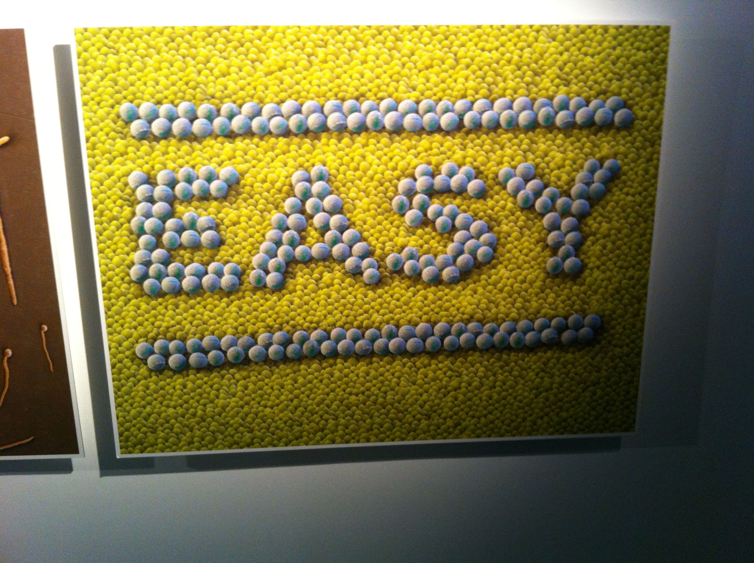 Stefan Sagmeister  Happy Show Paris CLLC