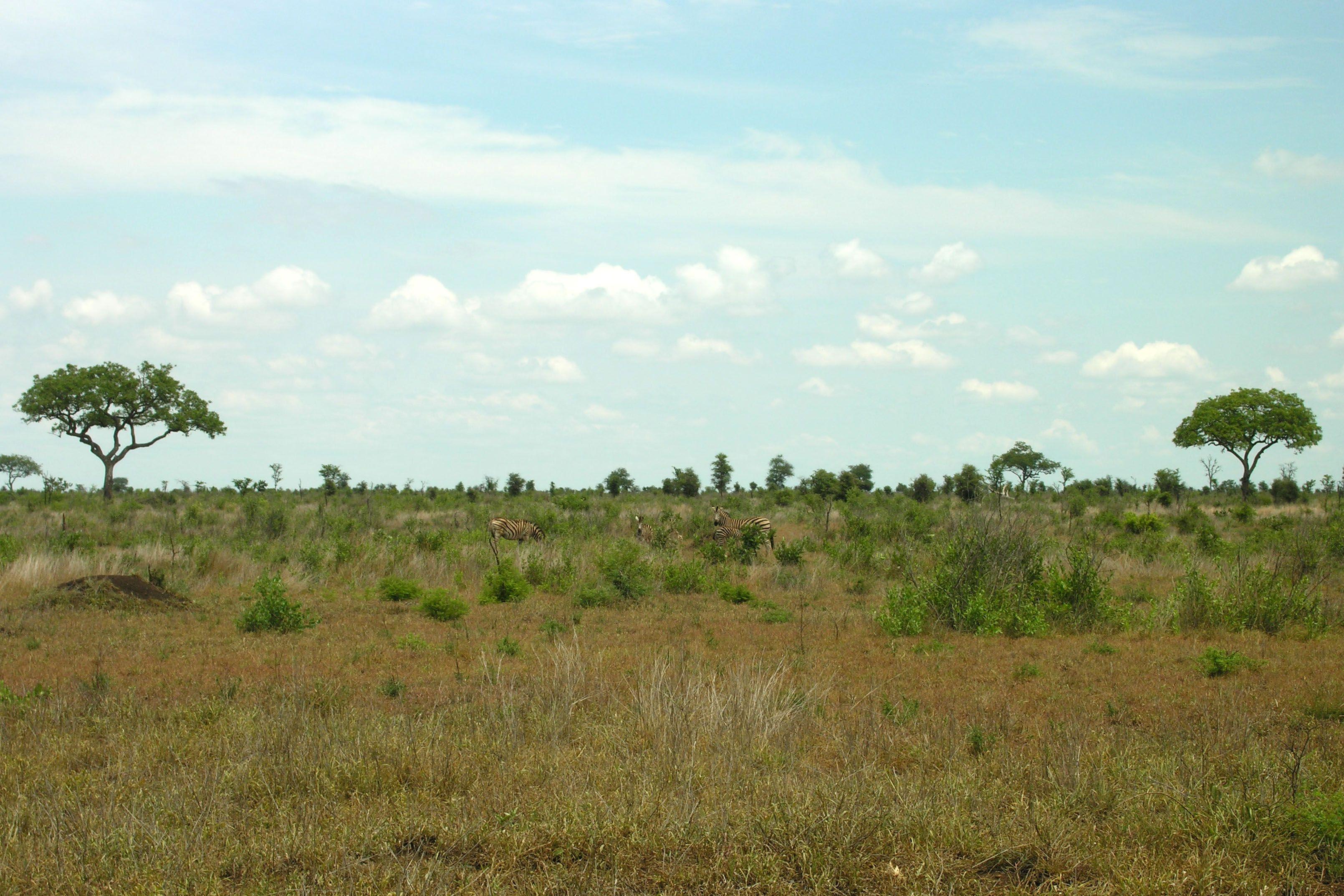 <b>African landscape</b>