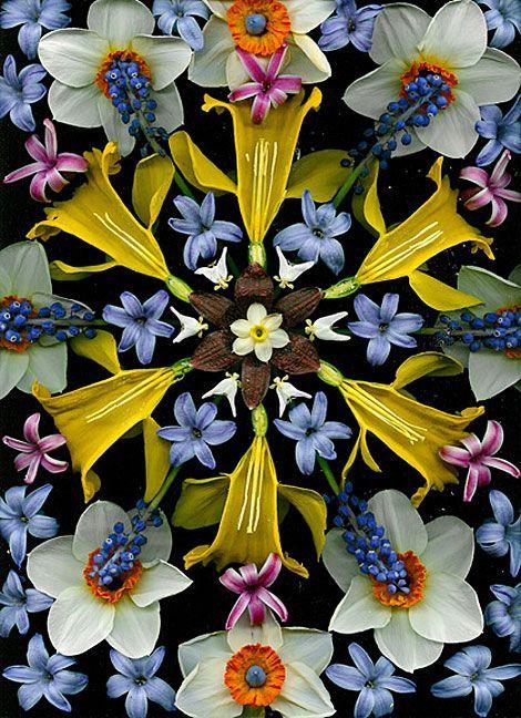 graphic print, flowers