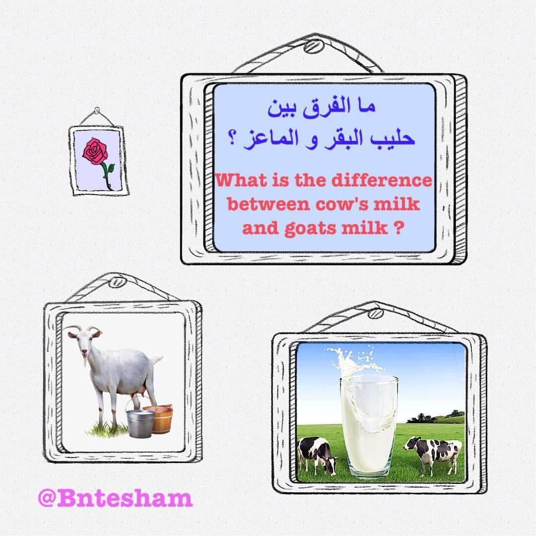 ما الفرق بين حليب البقر و الماعز حليب الماعز يحتوي على سعرات أكثر بقليل من حليب البقر و نسبة الدهون و البروتين أعلى بالإضافة إلى الكالسيوم Goat Milk Milk Cow