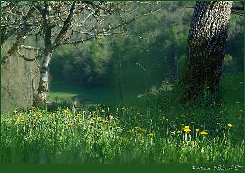 Le Printemps En Rase Mottes By Michel Seguret Tree Plants Garden
