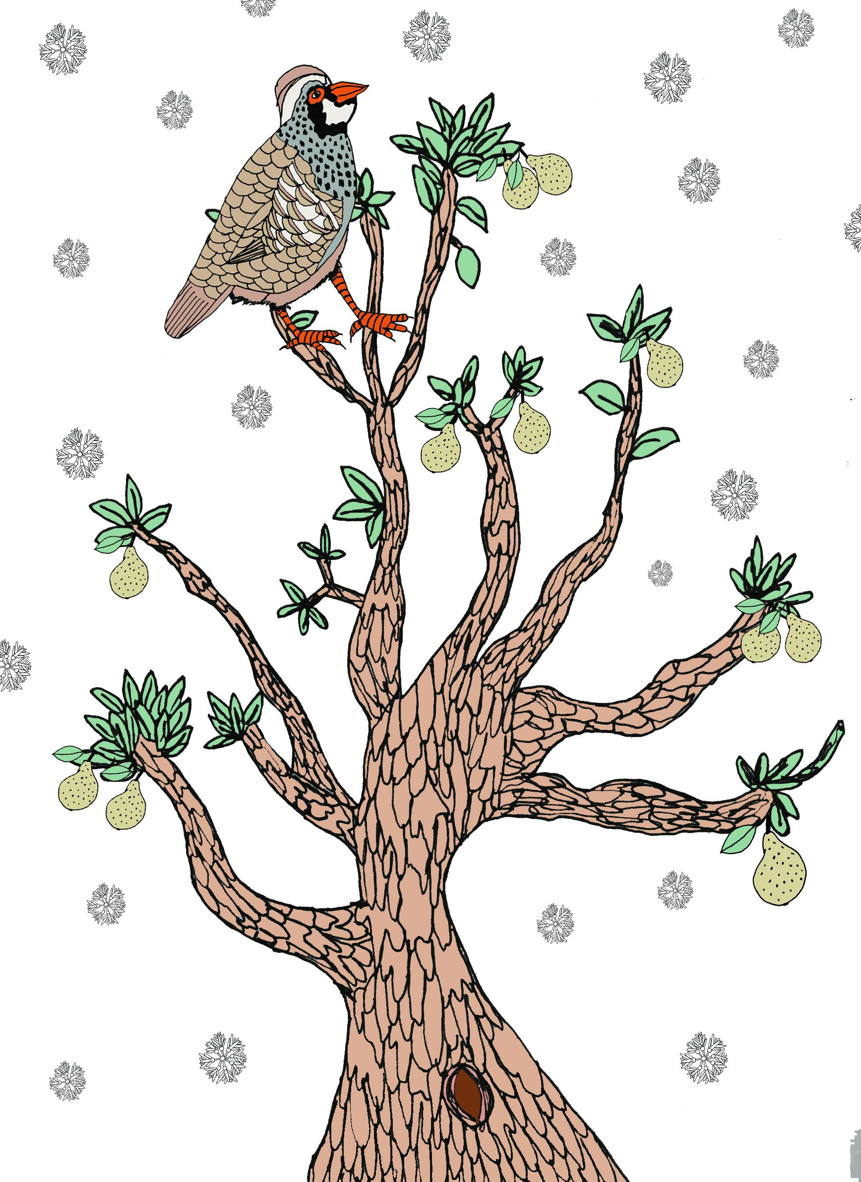 A partridge in a pear tree christmas pinterest pear trees a partridge in a pear tree kristyandbryce Gallery