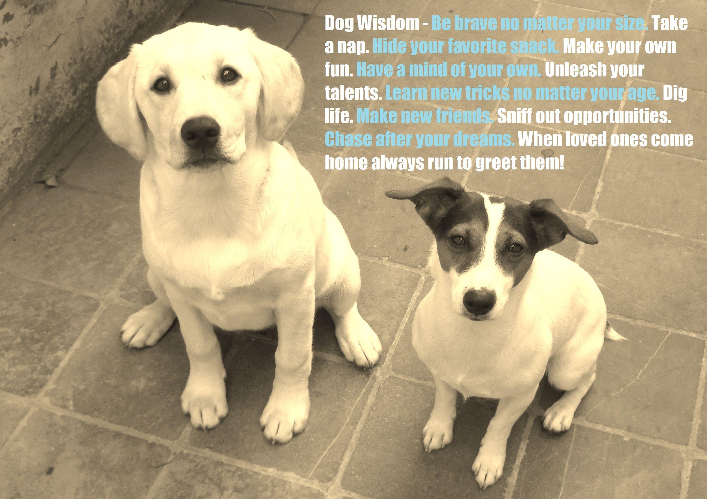 Dog Quotes Bing Images Dog Quotes Dog Quotes Funny Cute White Dogs