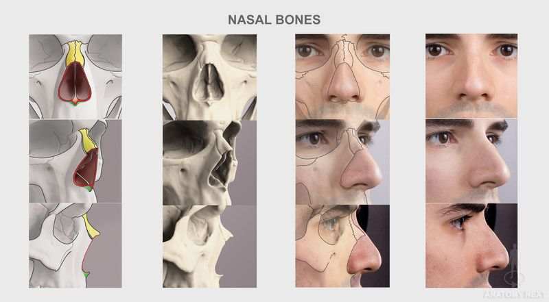 Anatomy Next Human Anatomy Reference Images And Interactive