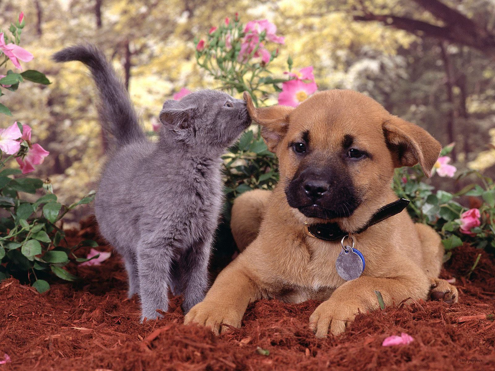cute cats and dogs pictures Cute Cat And Dog Playing In