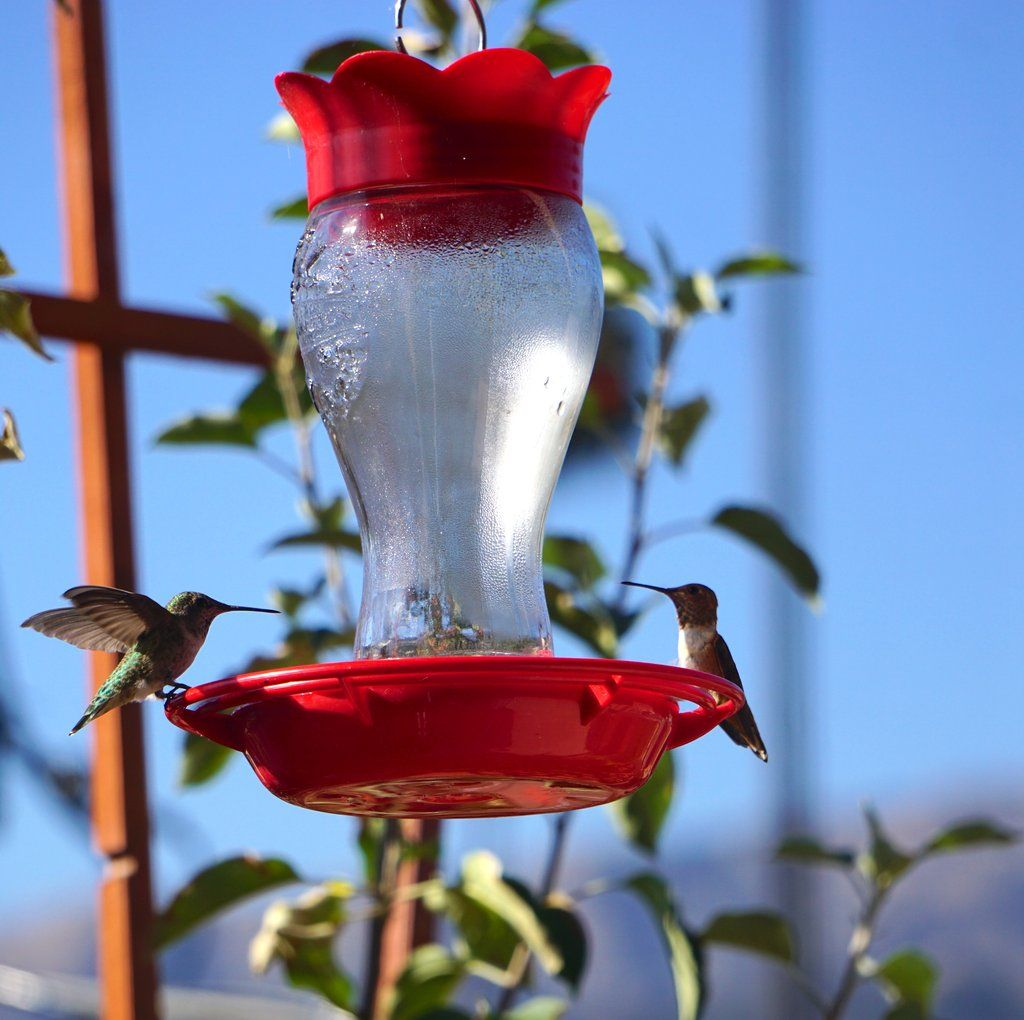 Balcony garden summer birds in 2020 balcony garden bird