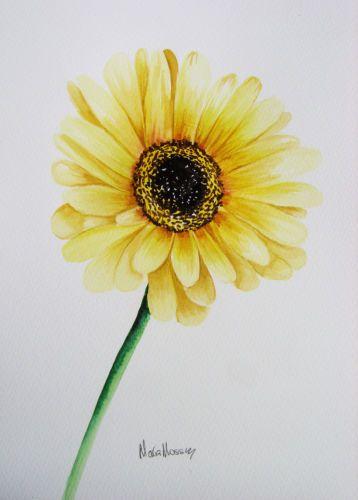 Yellow Gerbera Daisy Original Art Watercolour Painting By Maria