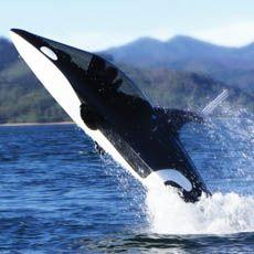 Wow..Killer Whale Submarine via @Incredible Things
