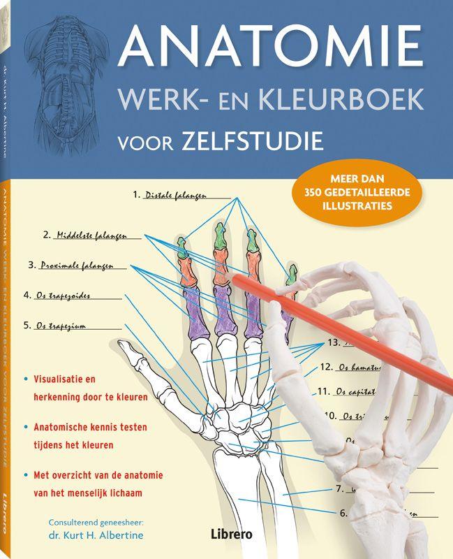 Anatomie. Werk- en kleurboek voor zelfstudie   IPC Ben je in vorm ...